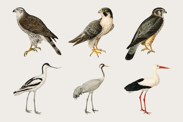 Insieme disegnato a mano di vettore misto uccelli e falchi
