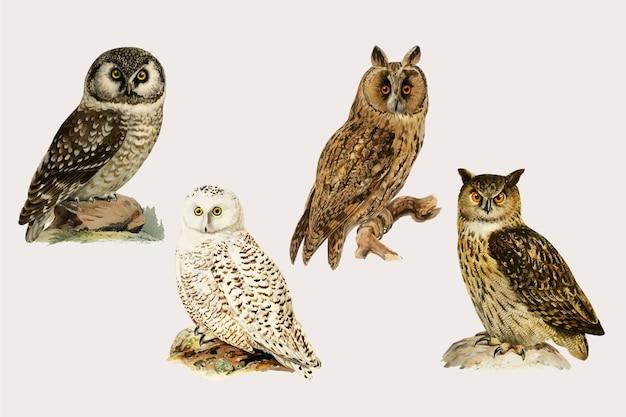 Vector mixed owl birds hand drawn set