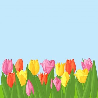 Vector multicolored tulips on blue