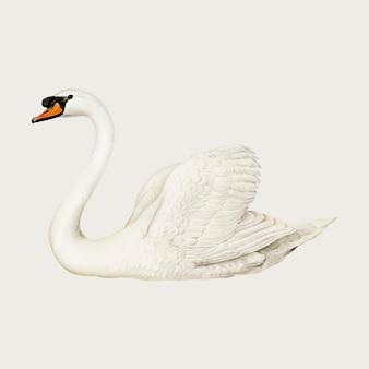 Вектор немой лебедь птица рисованной