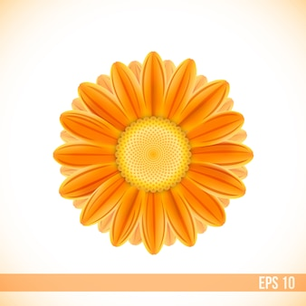 Vector orange color gerbera flower