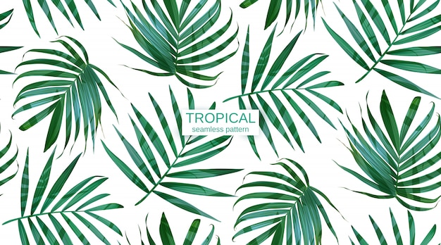Vector palm frond leaves seamless pattern.