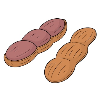 Vector of peanut
