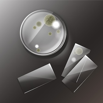 Vector petri dish with molds, bacterial colonies top view isolated on background