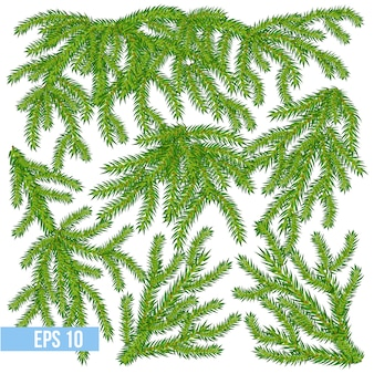 Vector pine and spruce branches set