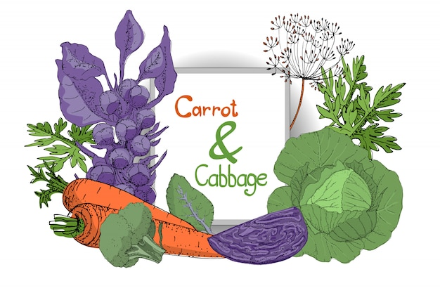 Vector plant set with fresh white cabbage, purple cabbage, green broccoli, purple brussels sprouts and orange carrot with leaves and seeds.