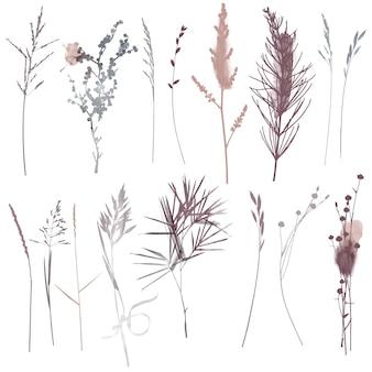 ベクトル植物とハーブセットイラスト。水彩イラスト。