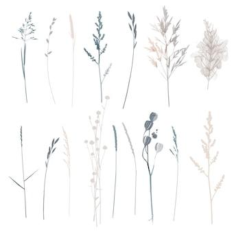 벡터 식물과 허브 그림을 설정합니다. 수채화 그림입니다.