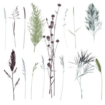 Vector  plants and herb set illustration. watercolor illustration.