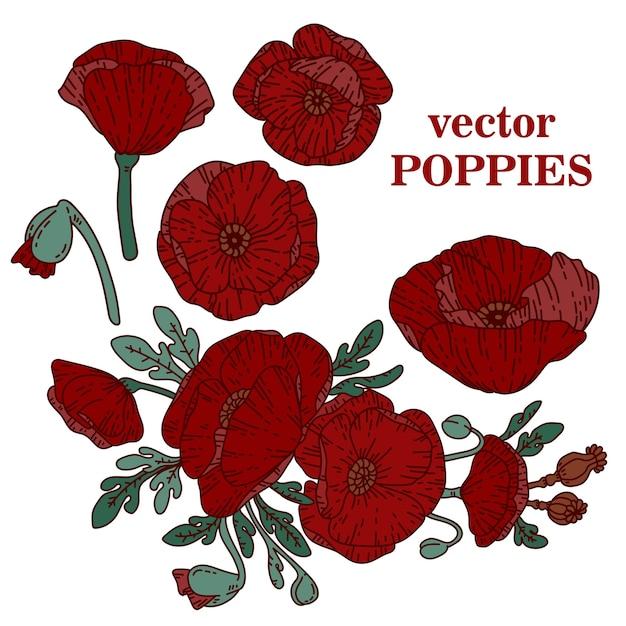 Vector poppies