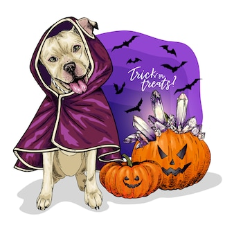 Vector portrait of pit bull terrier dog coat and pumpkins with crystal crown