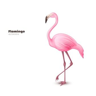 Vector realistic 3d pink flamingo