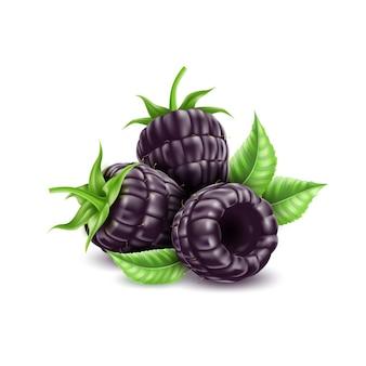 Вектор реалистичные ежевики сочные фрукты с листом