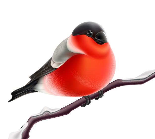 Векторные реалистичные птица снегирь на ветке рождество