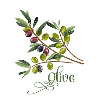 Vector realistic illustration of black and green olives branch