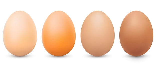 ベクトルリアルなライトブラウンとダークブラウンの卵セット正面図3dチキン全卵