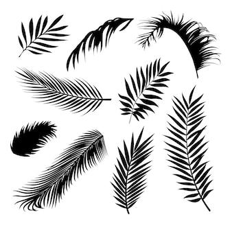 ベクトルの現実的な手のひらの葉の黒いシルエットは熱帯の木の枝を設定します