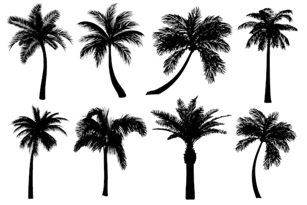 Vector realistic palm tree silhouettes set black detailed tropical icons collection of coconut tree