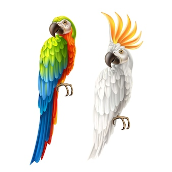 Vector realistic parrots macaw and cockatoo set