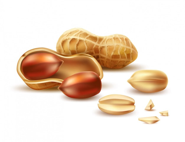 Vector realistic peanut in nutshell, kernels and peel