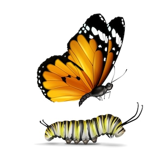 벡터 현실적인 일반 호랑이 또는 아프리카 군주 나비와 애벌레는 흰색 배경에 고립 된 측면보기를 닫습니다