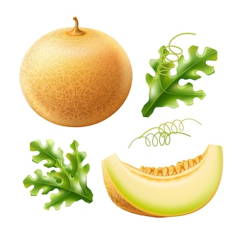 Vector realistic round melon with slice delicious sweet fruit set