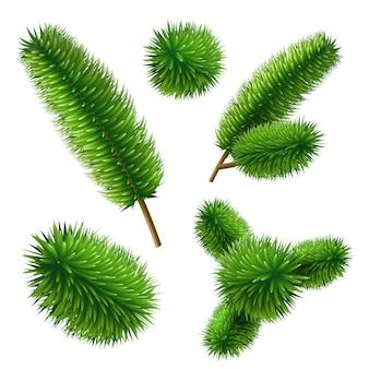 Набор векторных реалистичные еловые ветви дерева. елочные вечнозеленые веточки. природные символы зимнего праздника. рождественские ветки сосны.