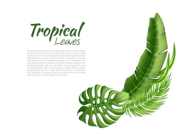 Вектор реалистичные тропические листья экзотические каникулы