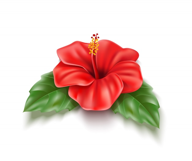 Vector red hibiscus realistic tropical flower leaf