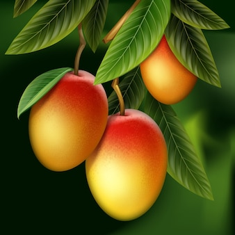 Vector ripe yellow, orange, red whole mango and leaves hanging on branch isolated with green blur background