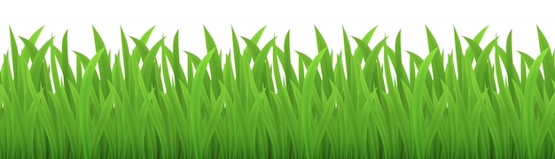 Vector seamless image of green grass