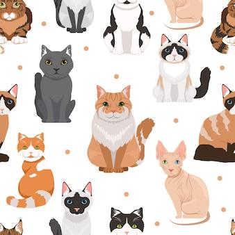 かわいい猫のシームレスなパターンベクトル。ペットの色付きの写真。猫ペット動物パターン背景イラスト
