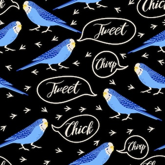 Vector seamless pattern with budgerigars parrots bird footprints and quotes chirp chick