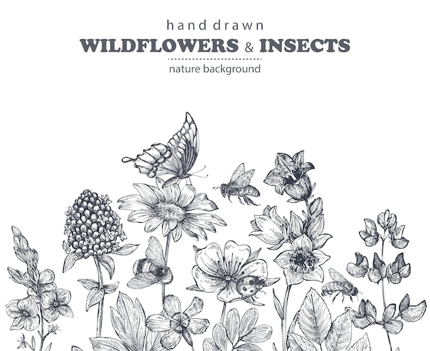 손으로 그린 카모마일, 야생화, 허브, 나비, 벌이 있는 벡터 매끄러운 패턴입니다. 스케치 스타일의 흑백 끝없는 그림.