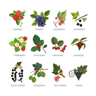 Vector set of berries. design elements in flat style isolated