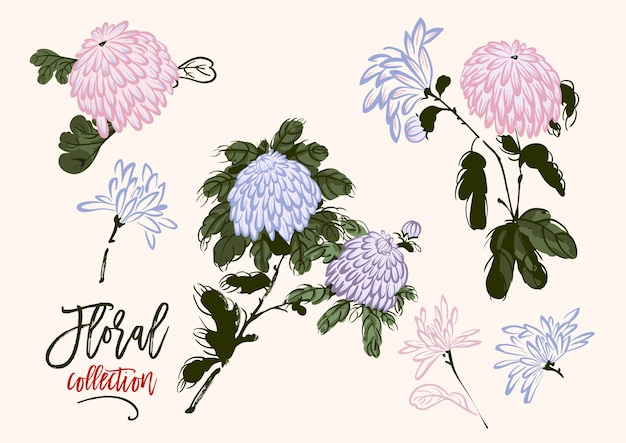 Vector set of blooming chrysanthemum in chinese style