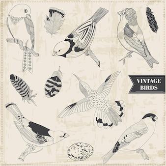 Vector set calligraphic hand drawn birds