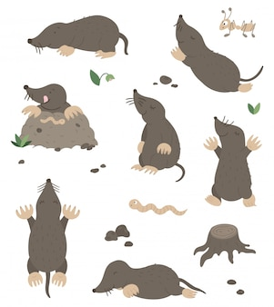 Vector set of cartoon style flat funny moles in different poses with ant, worm, leaves, stones clip art. cute illustration of woodland animals