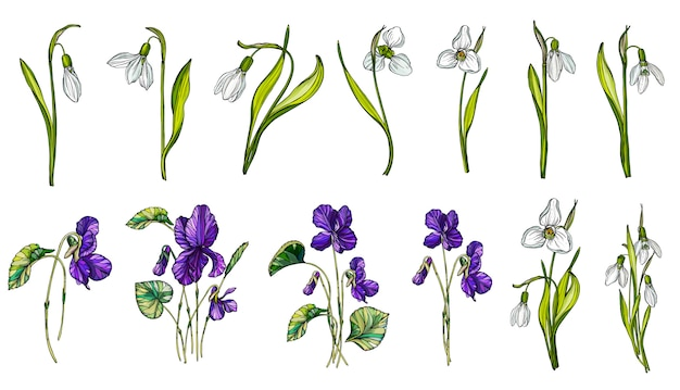 Vector set of colors of snowdrop and violets