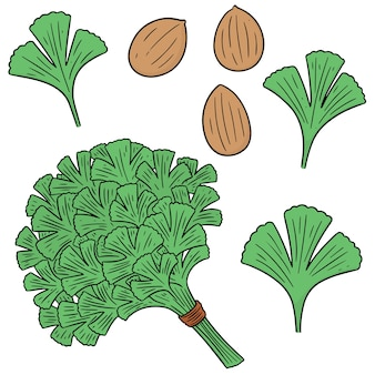 Vector set of coriander