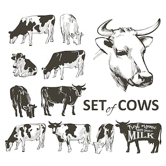 Vector set of cows