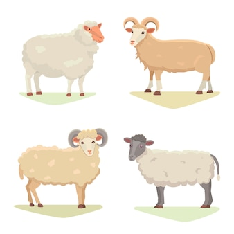 Vector set cute sheep and ram isolated retro illustration. standing sheeps silhouette on white. farm fanny milk young animals. cartoon style