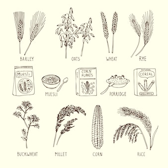Vector set of different cereals. muesli, wheat, rice and others.