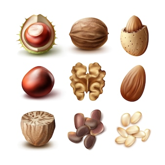 Vector set of different nuts shelled, unshelled walnuts, almonds, chestnuts, nutmeg and cedar top, side view isolated on white background