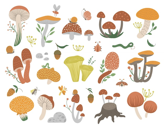Vector set of flat funny mushrooms with berries, leaves and insects. autumn clip art. cute fungi illustration with acorns and cones
