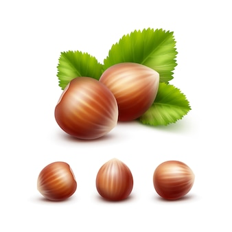 Vector set of full unpeeled realistic hazelnuts with leaves on white