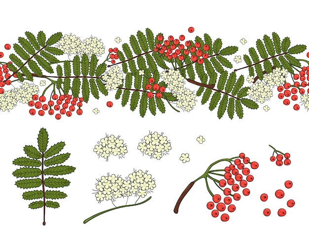 Vector set of garden rowan design elements and pattern brush with stylized rowan leaves, flowers, berries. hand drawn cartoon style illustration. cute autumn templates for card design