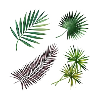 Vector set of green, violet tropical palm leaves isolated on white background