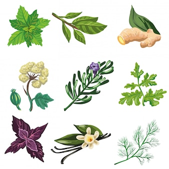 Vector set of herbal and spices.