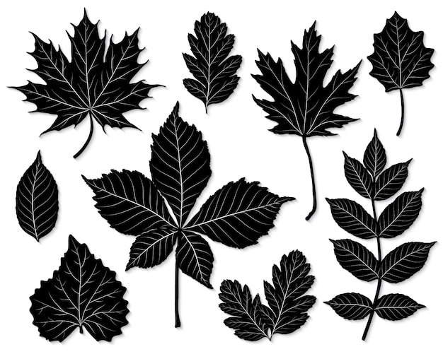 Vector set of leaves silhouette